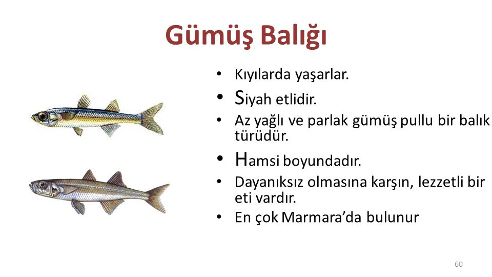Gümüş Balığı Siyah etlidir. Hamsi boyundadır. Kıyılarda yaşarlar.