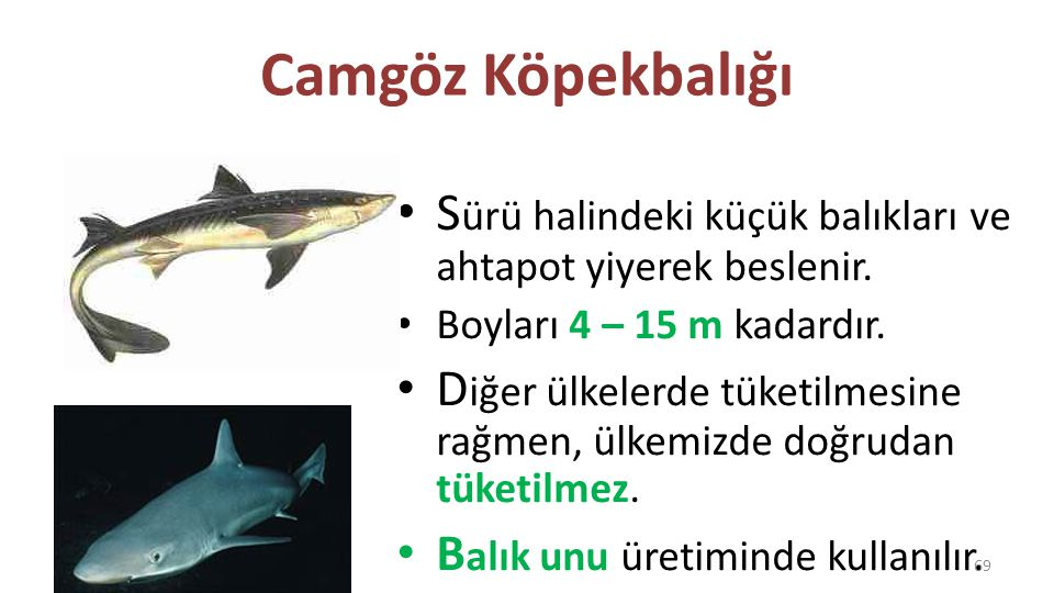 Camgöz Köpekbalığı Sürü halindeki küçük balıkları ve ahtapot yiyerek beslenir. Boyları 4 – 15 m kadardır.