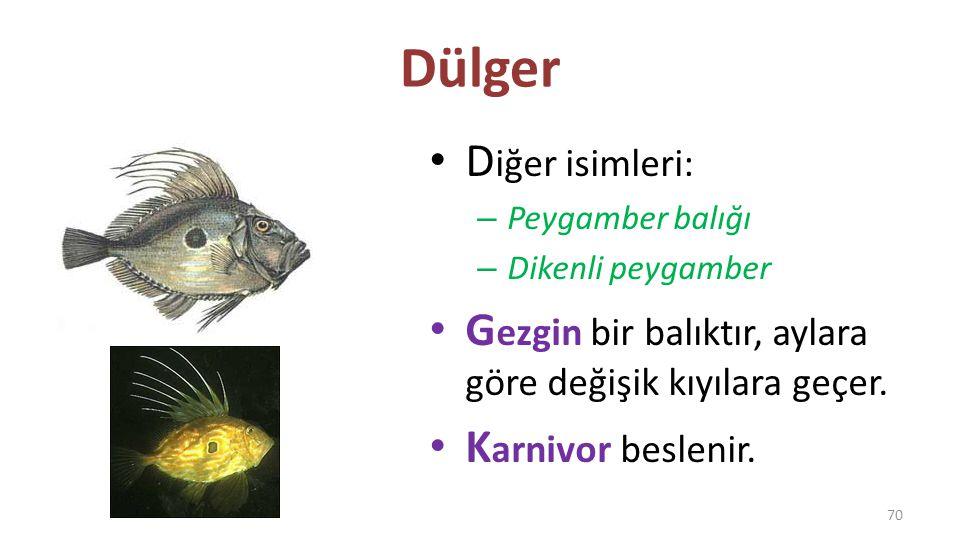 Dülger Diğer isimleri: