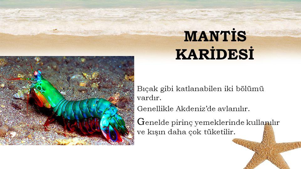 MANTİS KARİDESİ Bıçak gibi katlanabilen iki bölümü vardır. Genellikle Akdeniz'de avlanılır.