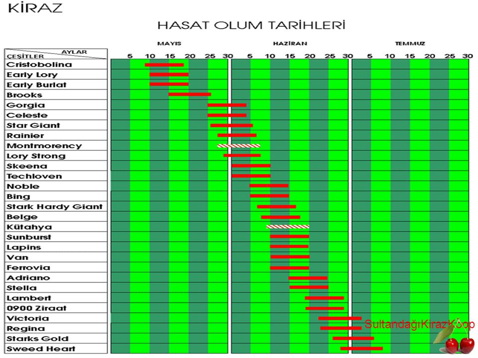 SultandağıKirazKoop