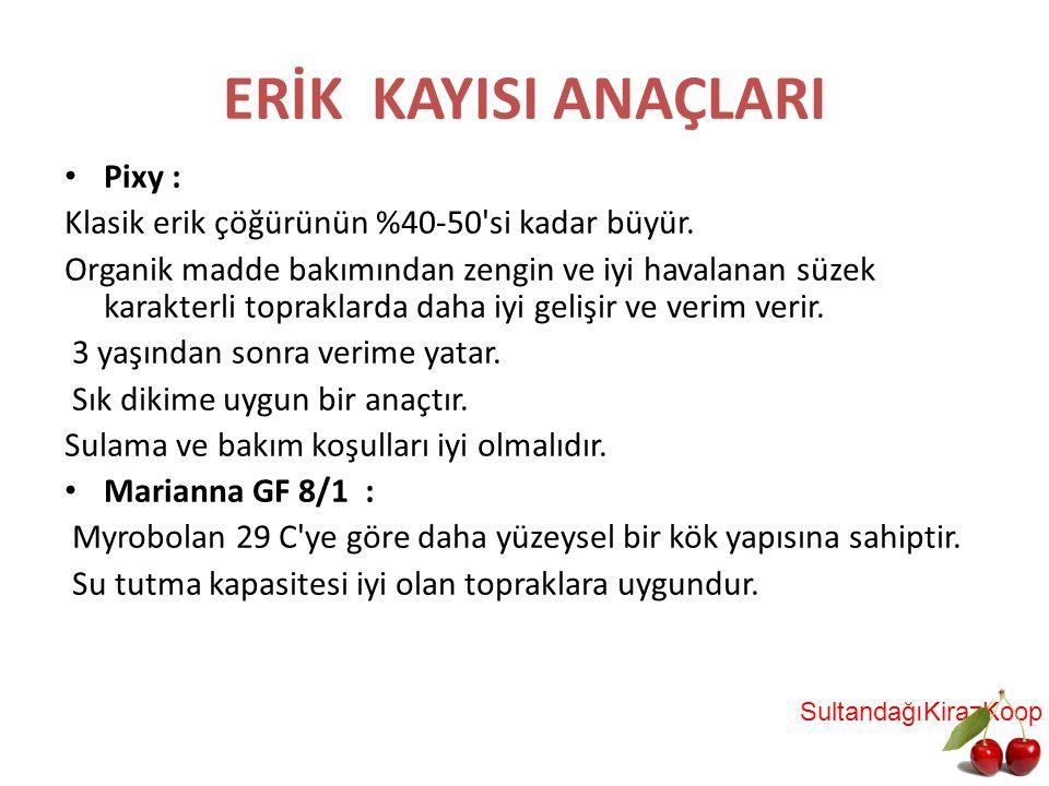 ERİK KAYISI ANAÇLARI Pixy :