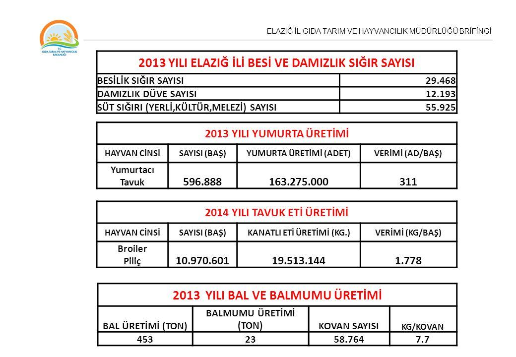 2013 YILI ELAZIĞ İLİ BESİ VE DAMIZLIK SIĞIR SAYISI