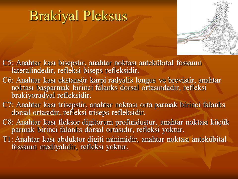 Brakiyal Pleksus C5: Anahtar kası bisepstir, anahtar noktası antekübital fossanın lateralindedir, refleksi biseps refleksidir.