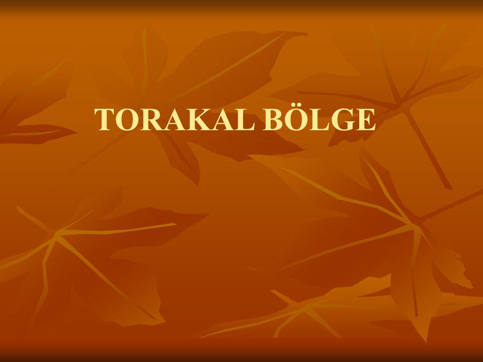 TORAKAL BÖLGE