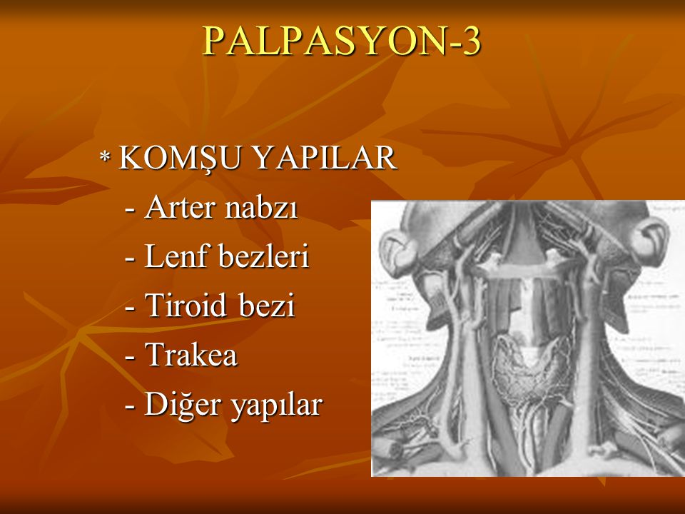 PALPASYON-3 - Arter nabzı - Lenf bezleri - Tiroid bezi - Trakea