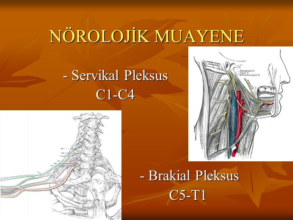 NÖROLOJİK MUAYENE - Servikal Pleksus C1-C4 - Brakial Pleksus C5-T1