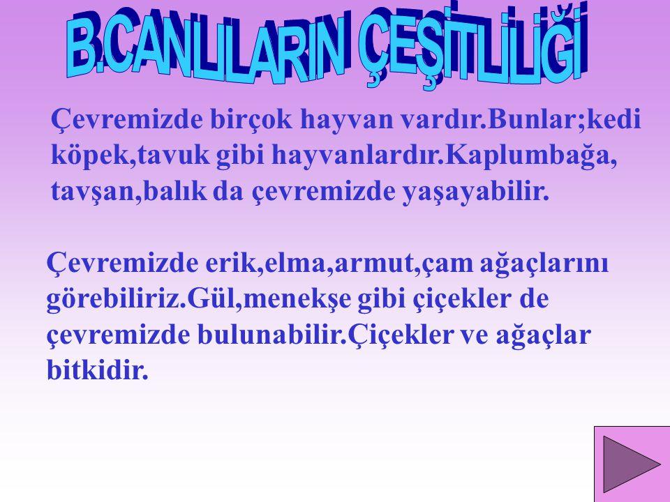 B.CANLILARIN ÇEŞİTLİLİĞİ
