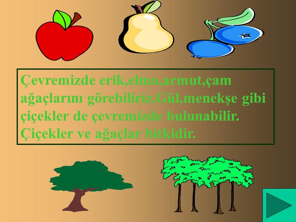 Çevremizde erik,elma,armut,çam