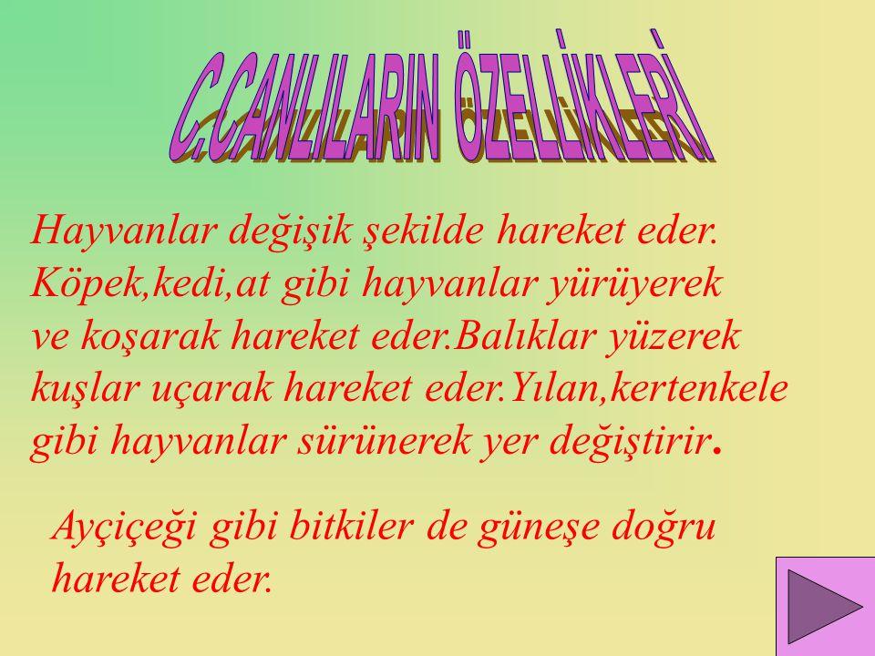 C.CANLILARIN ÖZELLİKLERİ C.CANLILARIN ÖZELLİKLERİ