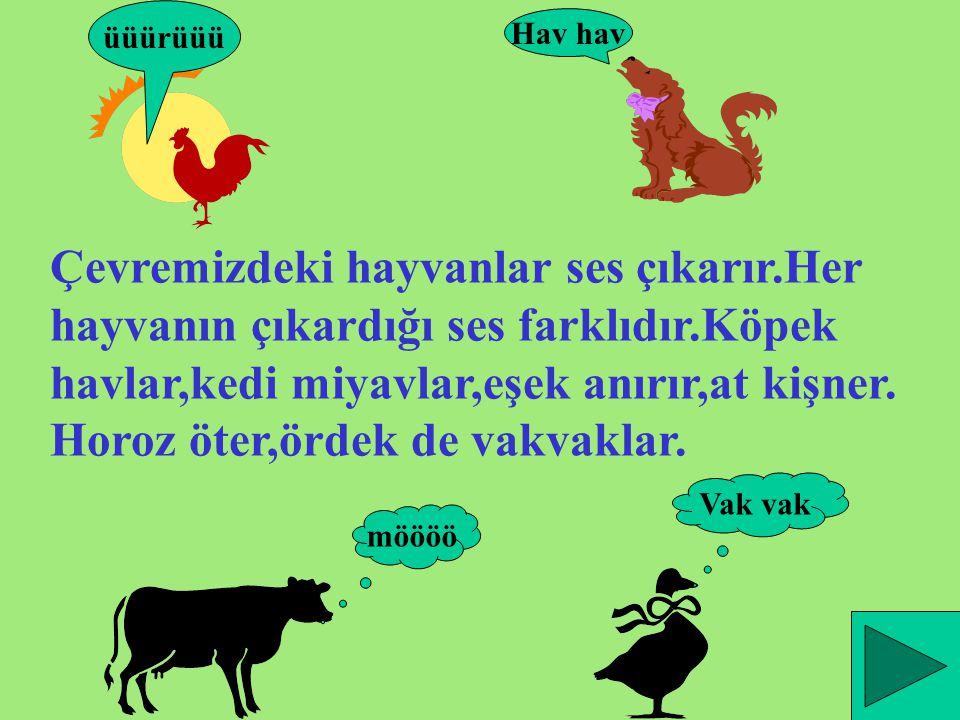 Çevremizdeki hayvanlar ses çıkarır.Her