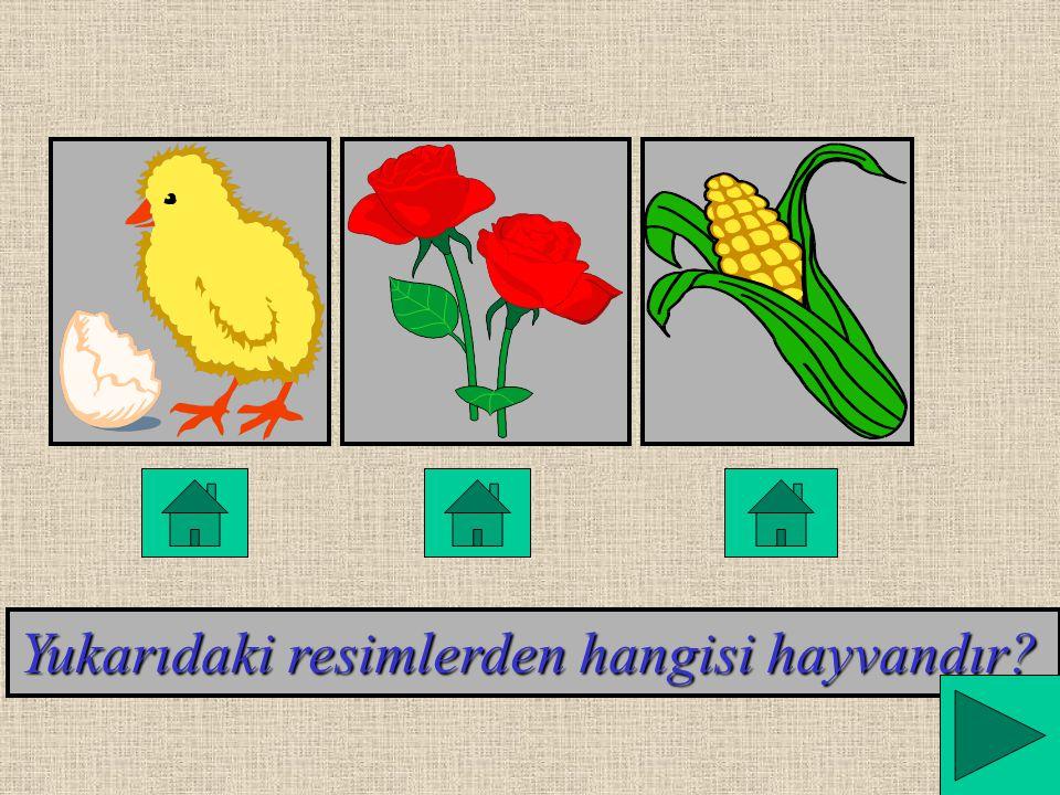 Yukarıdaki resimlerden hangisi hayvandır