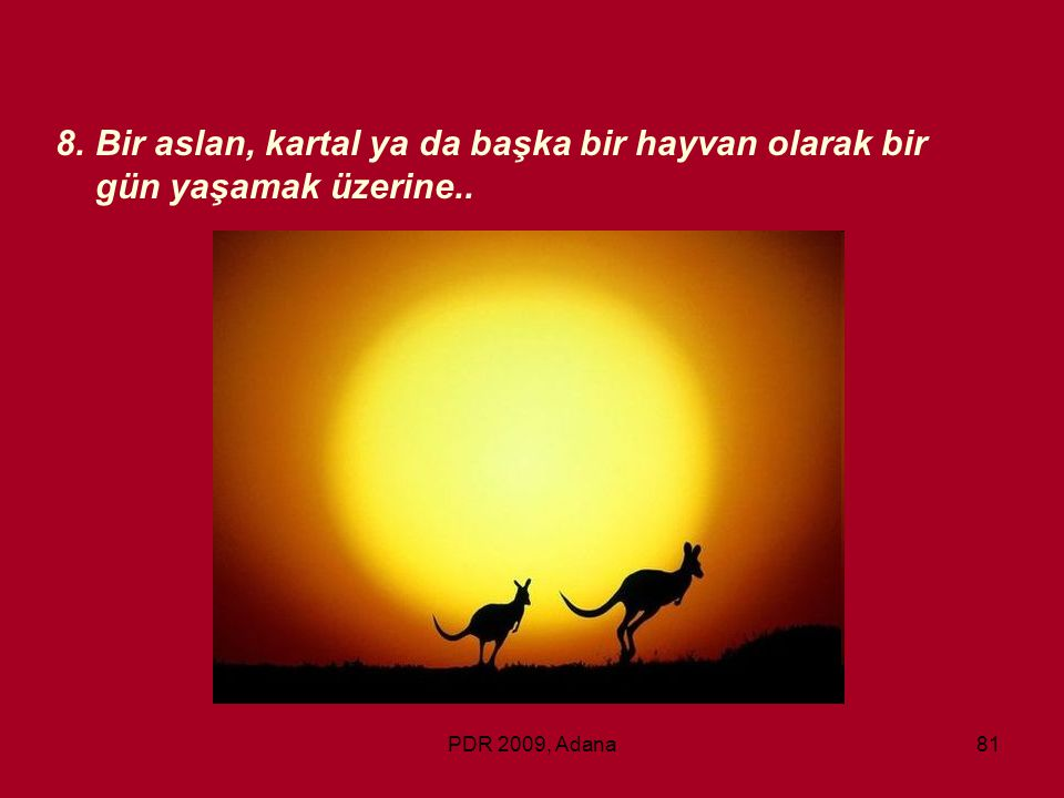 Bir aslan, kartal ya da başka bir hayvan olarak bir gün yaşamak üzerine..