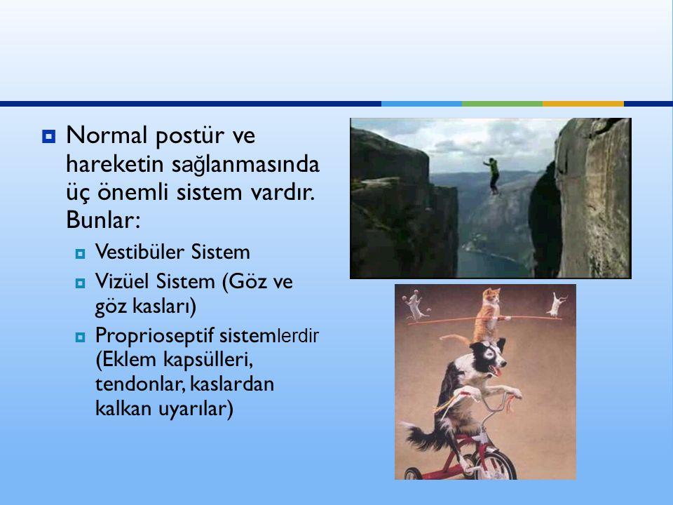 Normal postür ve hareketin sağlanmasında üç önemli sistem vardır