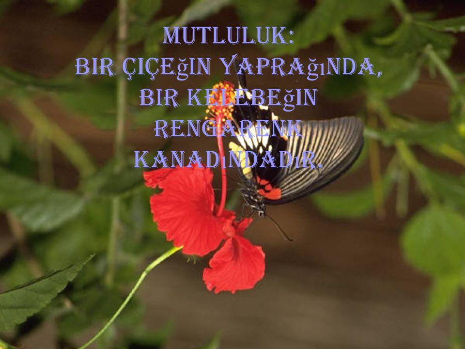 Bir çiçeğin yaprağında, bir kelebeğin rengarenk