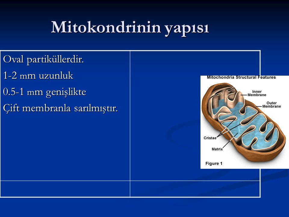 Mitokondrinin yapısı Oval partiküllerdir. 1-2 mm uzunluk