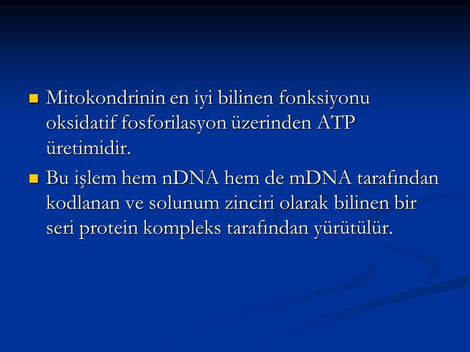Mitokondrinin en iyi bilinen fonksiyonu oksidatif fosforilasyon üzerinden ATP üretimidir.
