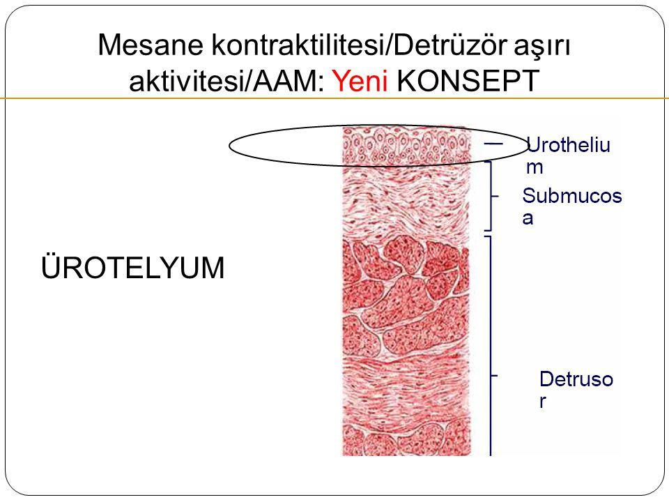 Mesane kontraktilitesi/Detrüzör aşırı aktivitesi/AAM: Yeni KONSEPT