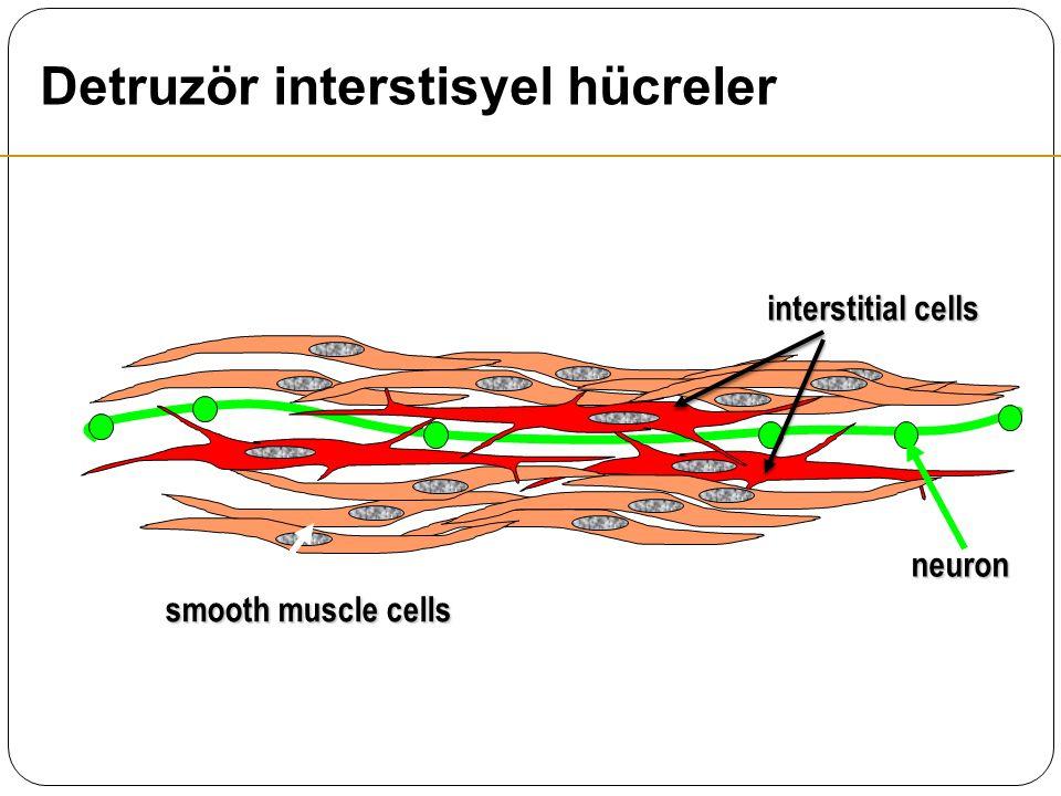 Detruzör interstisyel hücreler
