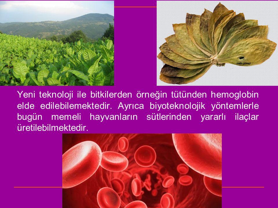 Yeni teknoloji ile bitkilerden örneğin tütünden hemoglobin elde edilebilemektedir.