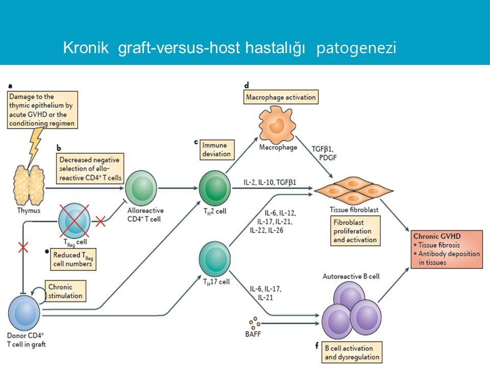 Kronik graft-versus-host hastalığı patogenezi