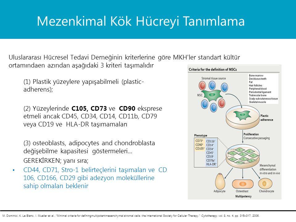 Mezenkimal Kök Hücreyi Tanımlama