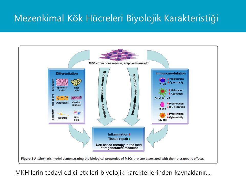 Mezenkimal Kök Hücreleri Biyolojik Karakteristiği