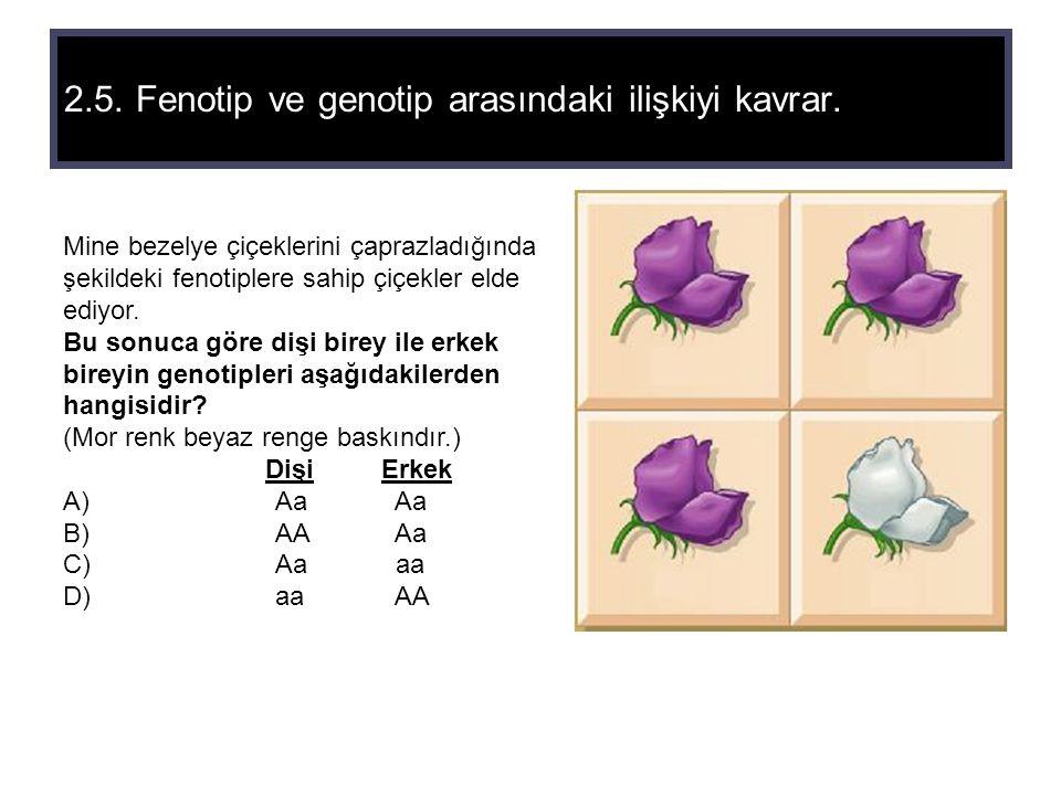 2.5. Fenotip ve genotip arasındaki ilişkiyi kavrar.