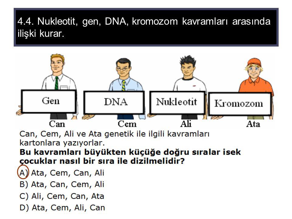 4.4. Nukleotit, gen, DNA, kromozom kavramları arasında ilişki kurar.