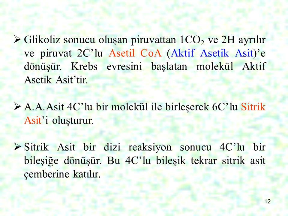Glikoliz sonucu oluşan piruvattan 1CO2 ve 2H ayrılır ve piruvat 2C'lu Asetil CoA (Aktif Asetik Asit)'e dönüşür. Krebs evresini başlatan molekül Aktif Asetik Asit'tir.