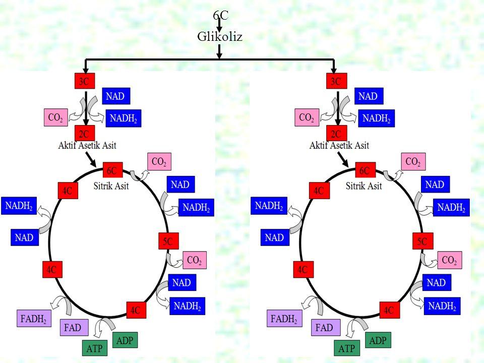 6C Glikoliz