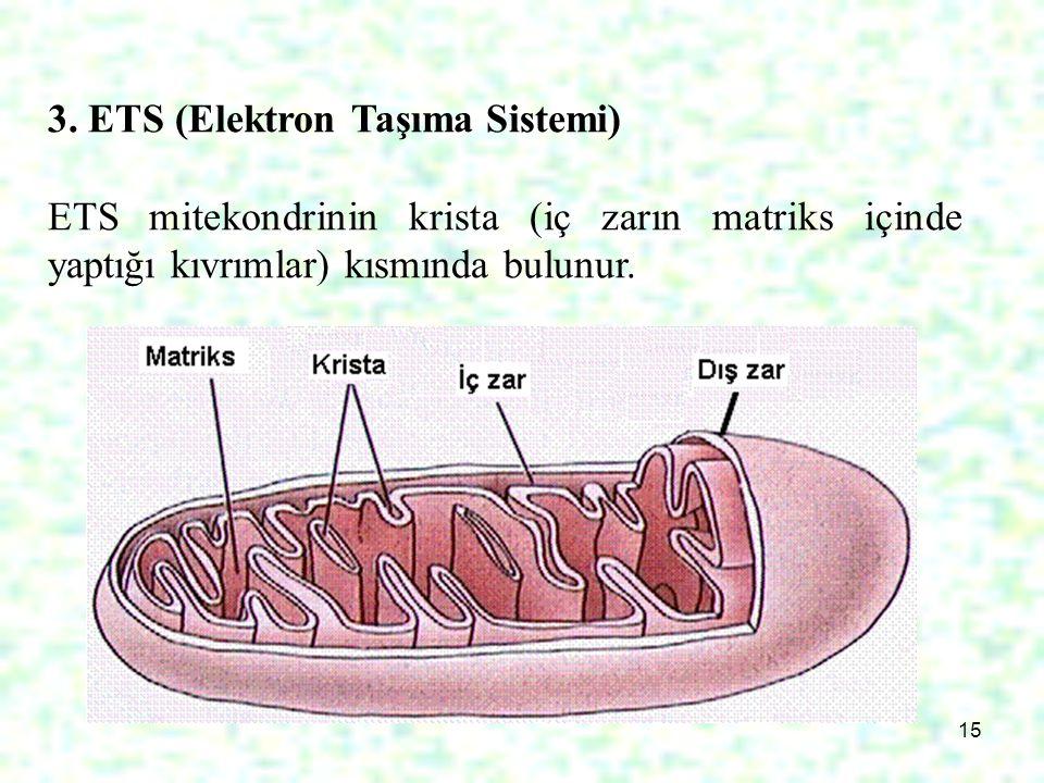 3. ETS (Elektron Taşıma Sistemi)