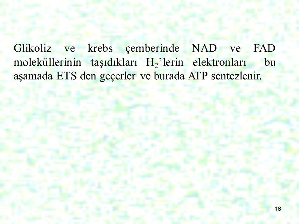 Glikoliz ve krebs çemberinde NAD ve FAD moleküllerinin taşıdıkları H2'lerin elektronları bu aşamada ETS den geçerler ve burada ATP sentezlenir.