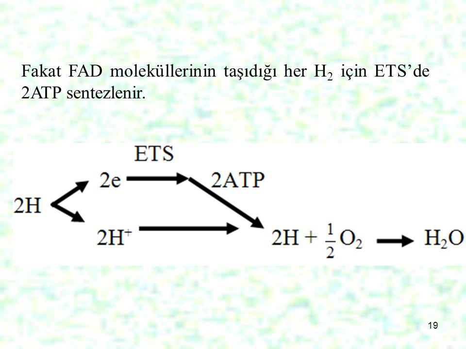 Fakat FAD moleküllerinin taşıdığı her H2 için ETS'de 2ATP sentezlenir.