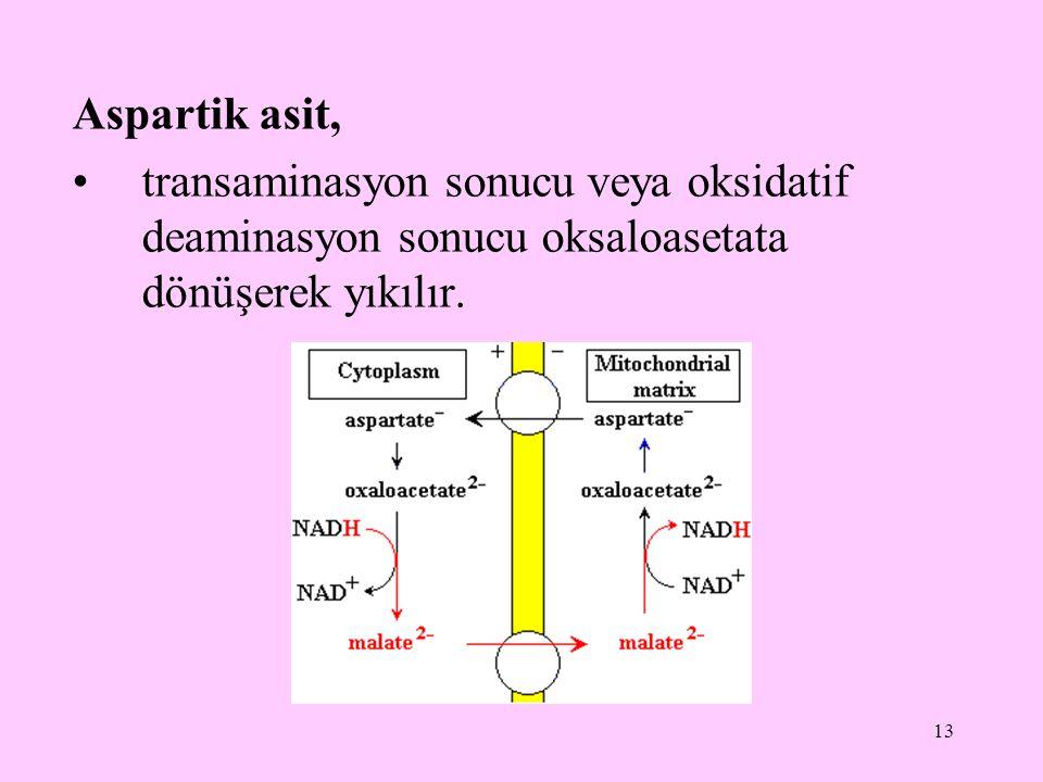 Aspartik asit, transaminasyon sonucu veya oksidatif deaminasyon sonucu oksaloasetata dönüşerek yıkılır.