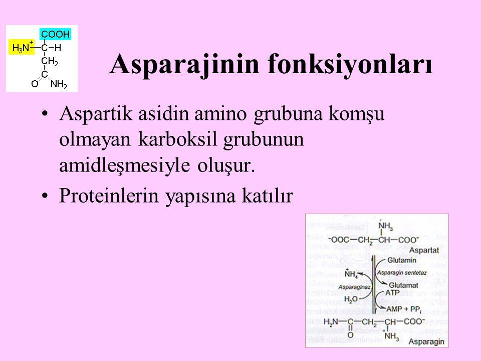 Asparajinin fonksiyonları