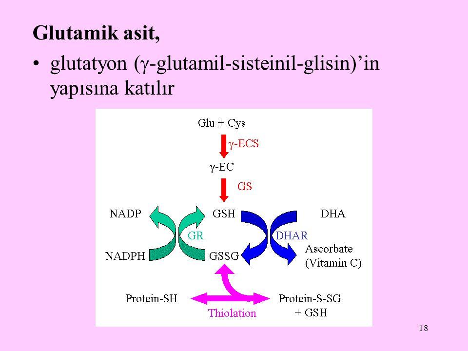Glutamik asit, glutatyon (-glutamil-sisteinil-glisin)'in yapısına katılır