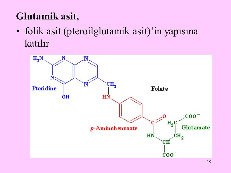 Glutamik asit, folik asit (pteroilglutamik asit)'in yapısına katılır