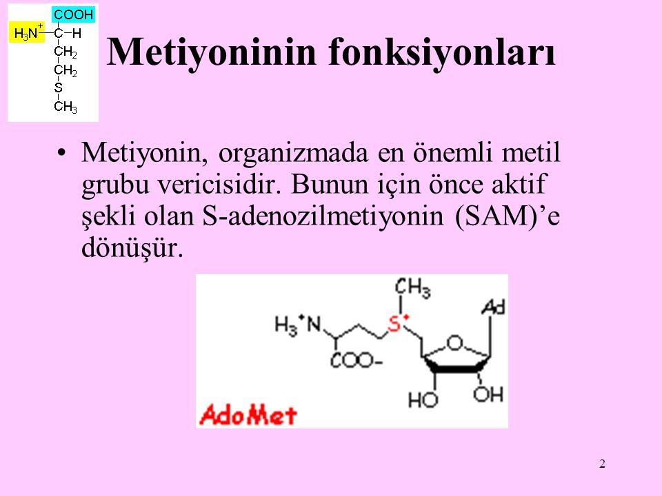 Metiyoninin fonksiyonları