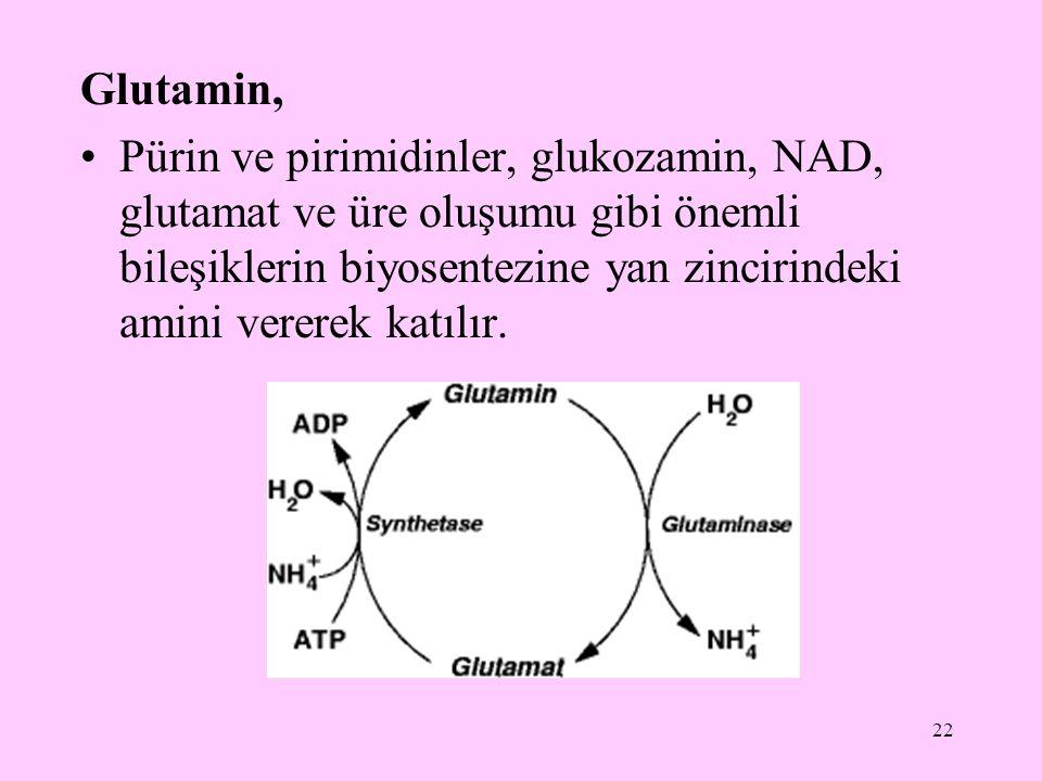 Glutamin,