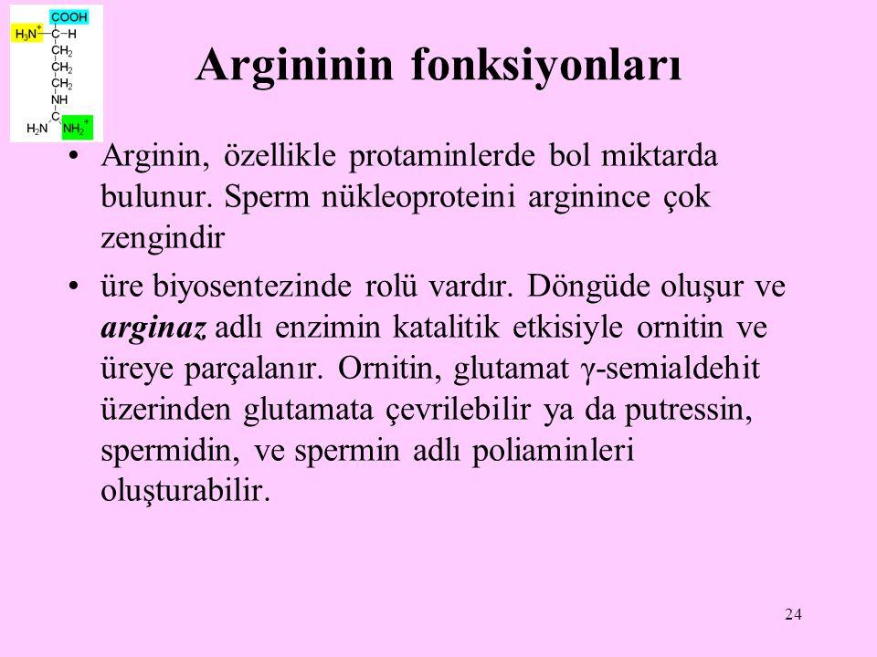 Argininin fonksiyonları