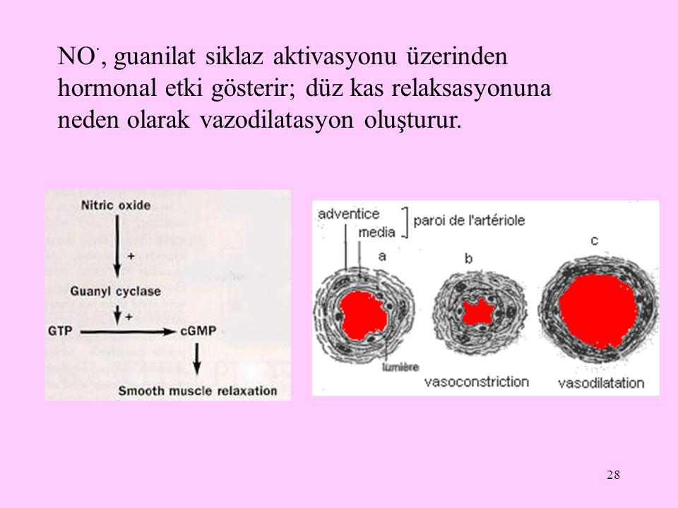 NO·, guanilat siklaz aktivasyonu üzerinden hormonal etki gösterir; düz kas relaksasyonuna neden olarak vazodilatasyon oluşturur.