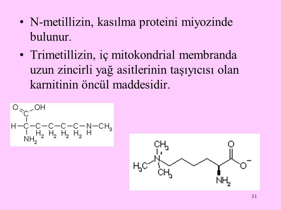 N-metillizin, kasılma proteini miyozinde bulunur.