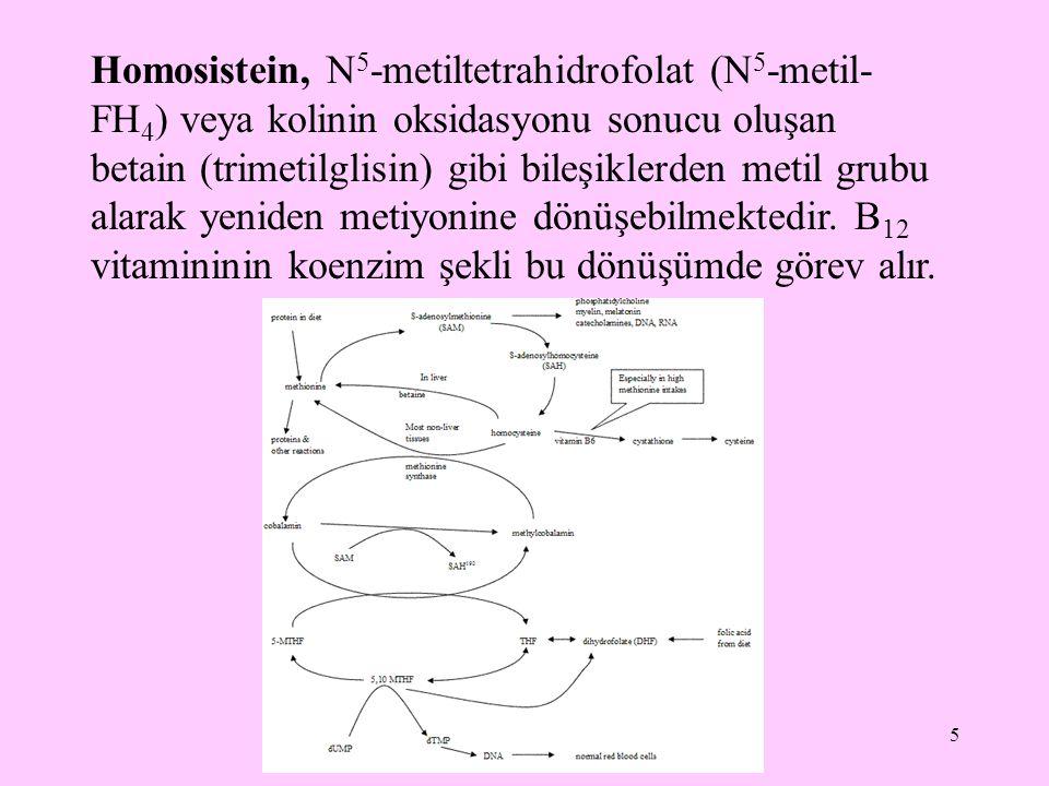 Homosistein, N5-metiltetrahidrofolat (N5-metil-FH4) veya kolinin oksidasyonu sonucu oluşan betain (trimetilglisin) gibi bileşiklerden metil grubu alarak yeniden metiyonine dönüşebilmektedir.
