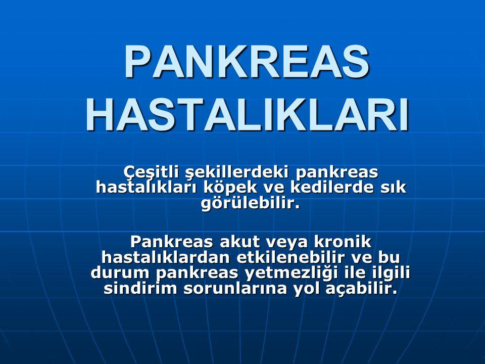 PANKREAS HASTALIKLARI