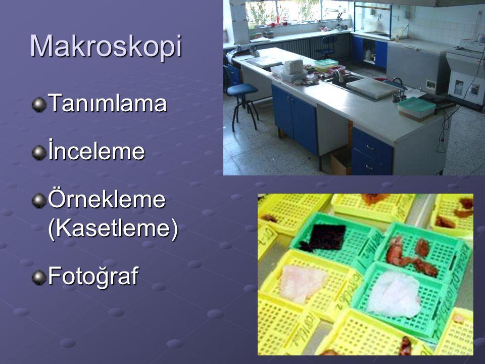 Makroskopi Tanımlama İnceleme Örnekleme (Kasetleme) Fotoğraf