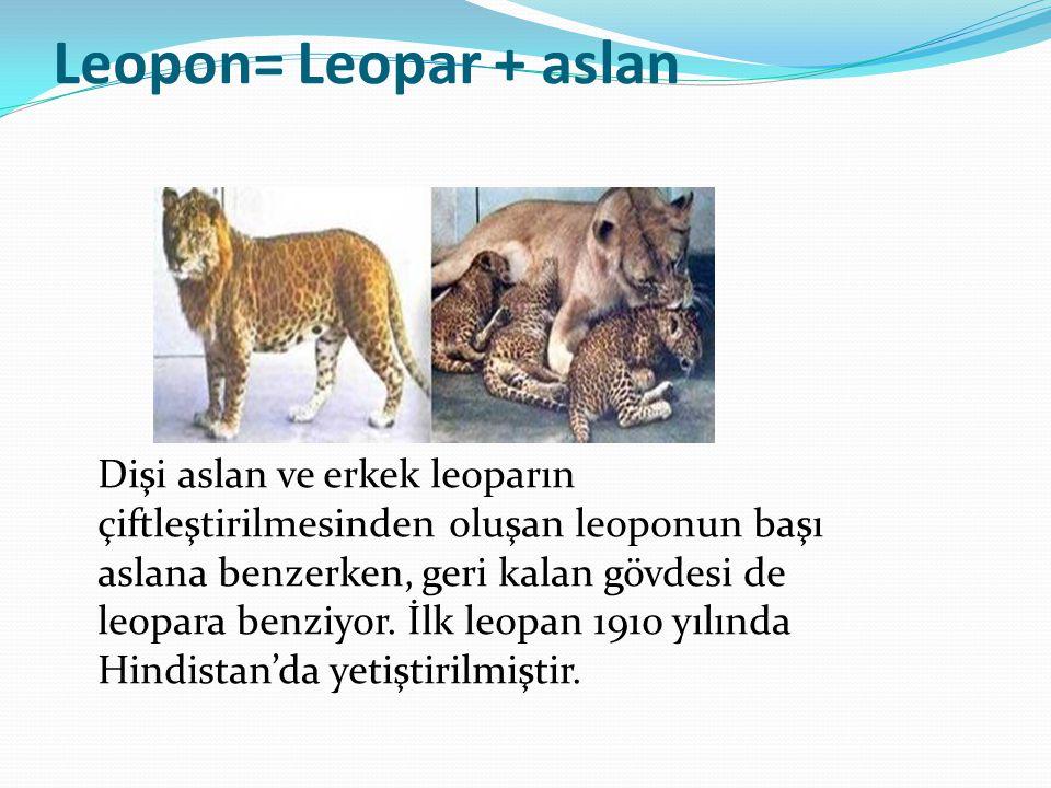 Leopon= Leopar + aslan