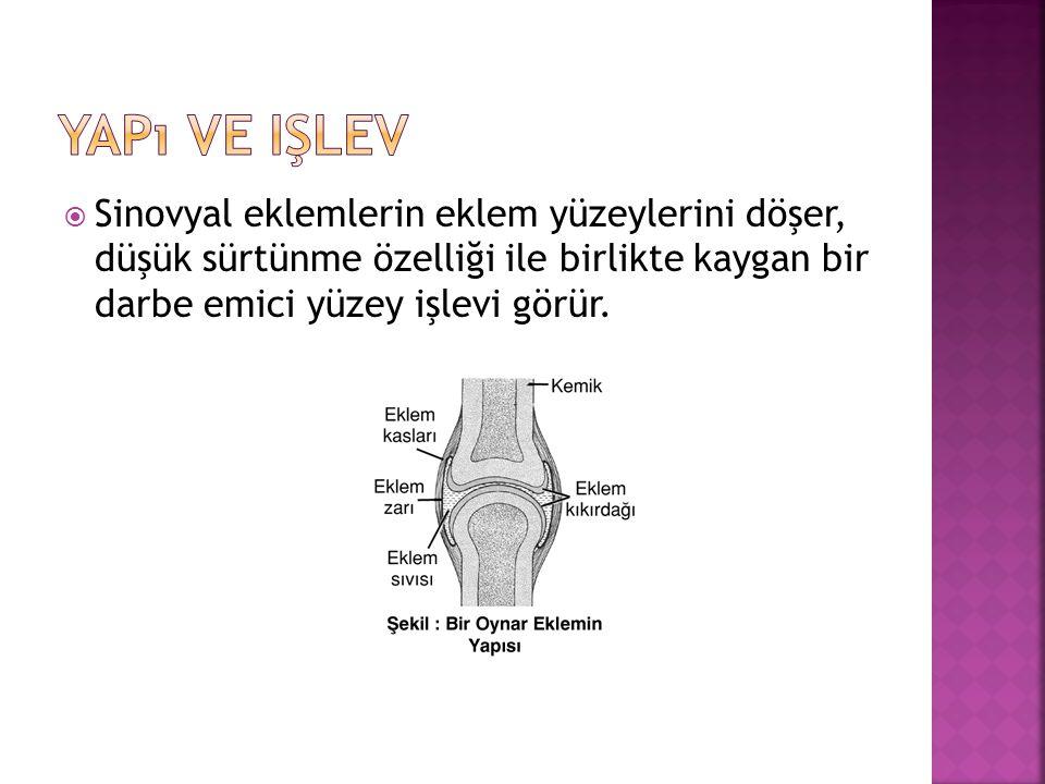 Yapı ve işlev Sinovyal eklemlerin eklem yüzeylerini döşer, düşük sürtünme özelliği ile birlikte kaygan bir darbe emici yüzey işlevi görür.