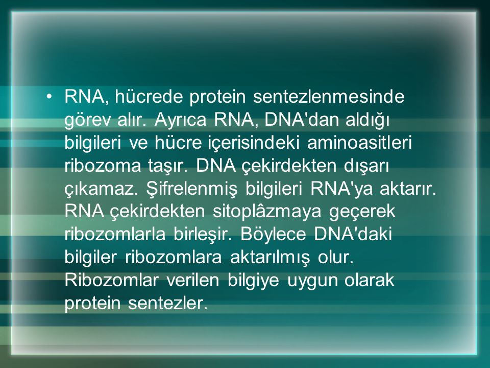 RNA, hücrede protein sentezlenmesinde görev alır