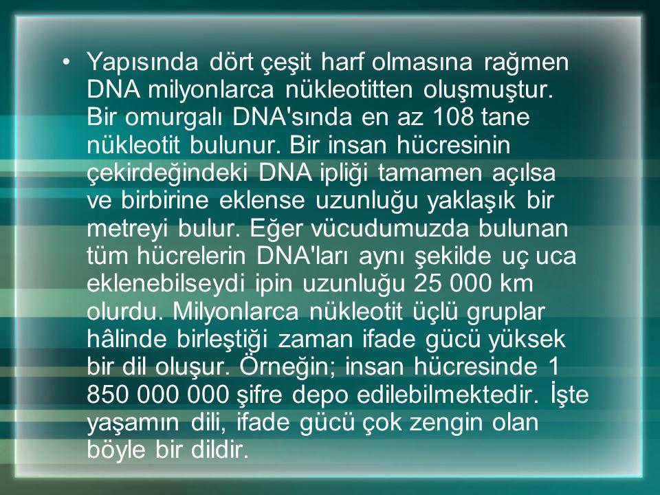 Yapısında dört çeşit harf olmasına rağmen DNA milyonlarca nükleotitten oluşmuştur.